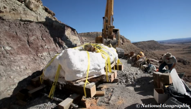 The nine-ton sandstone block revealed the skeletal remains of a 16ft-long adult, four juveniles and a baby Utahraptor which was approximately 3ft long from snout to tail.