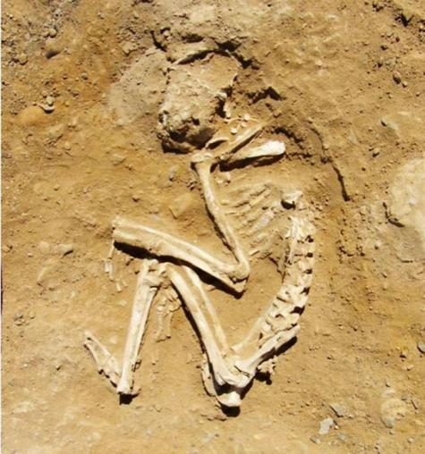 The skeletal remains of the pets, thought to have been buried more than five thousand years ago, revealed numerous broken bones and fractures, which points to them having received harsh beatings.  ©Renee Friedman